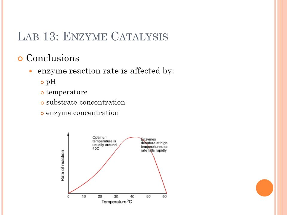 lab 2 enzyme catalysis essay The purpose of this lab was to observe and understand the effects of changes in temperature, ph, enzyme concentration, and substrate concentration on the.
