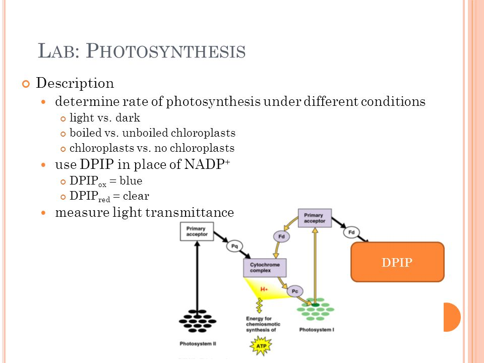 short essay photosynthesis All organisms depend ultimately upon green plants as a source of organic nutrients this process occurs whenever radiant energy is received by chlorophyll molecules by a series of energy- transformations carbon dioxide and water are combined in the production of carbohydrates and oxygen.