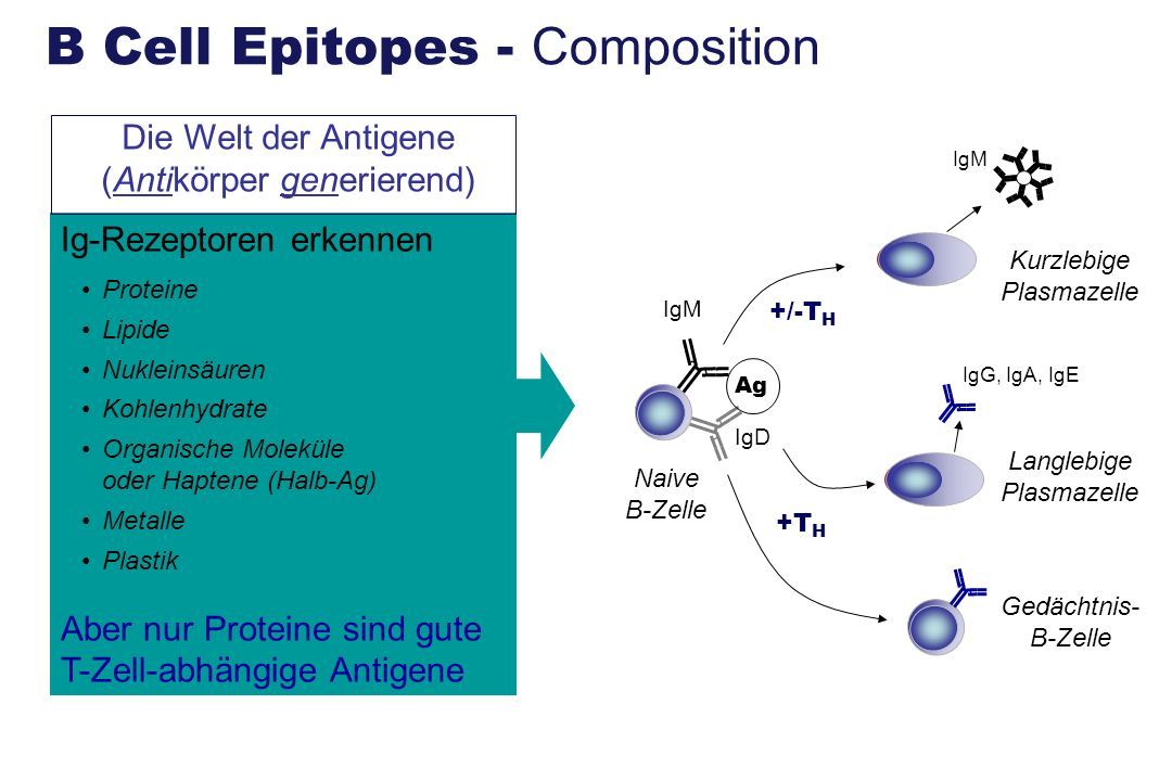 B Cell Epitopes - Composition