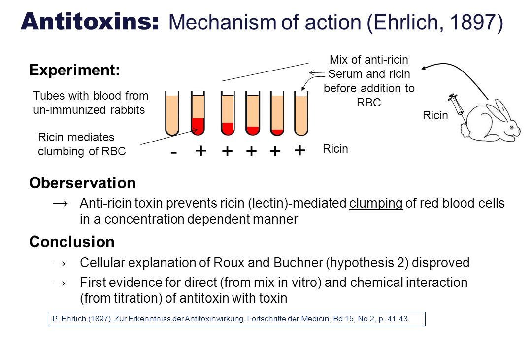 Serum and ricin before addition to RBC