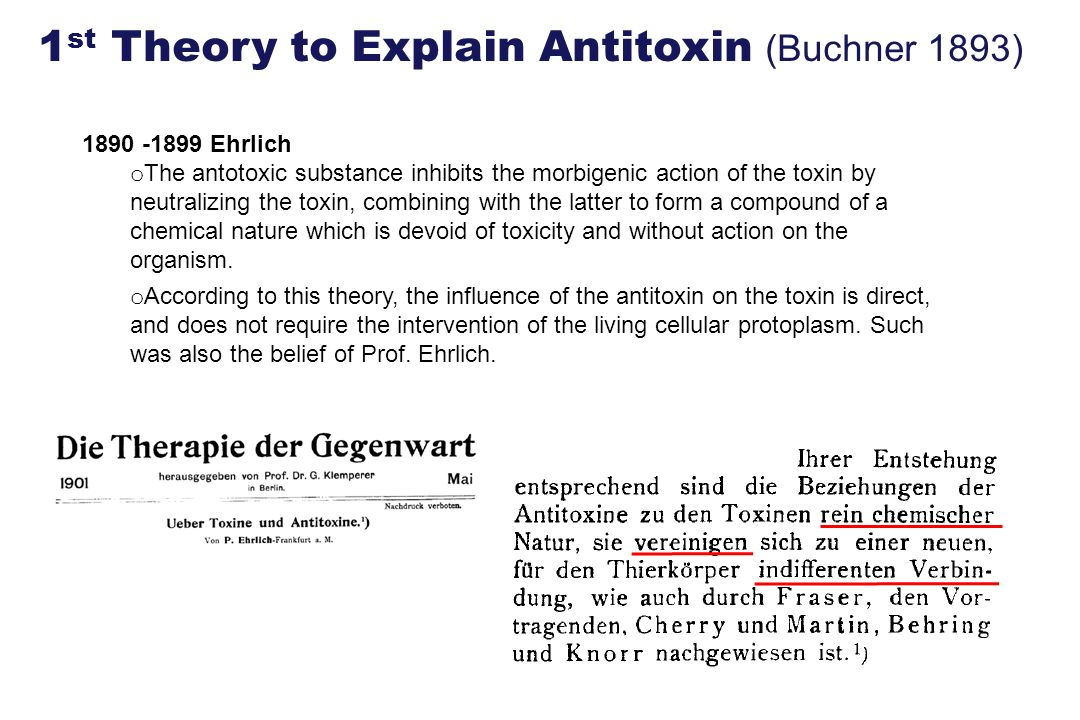 1st Theory to Explain Antitoxin (Buchner 1893)