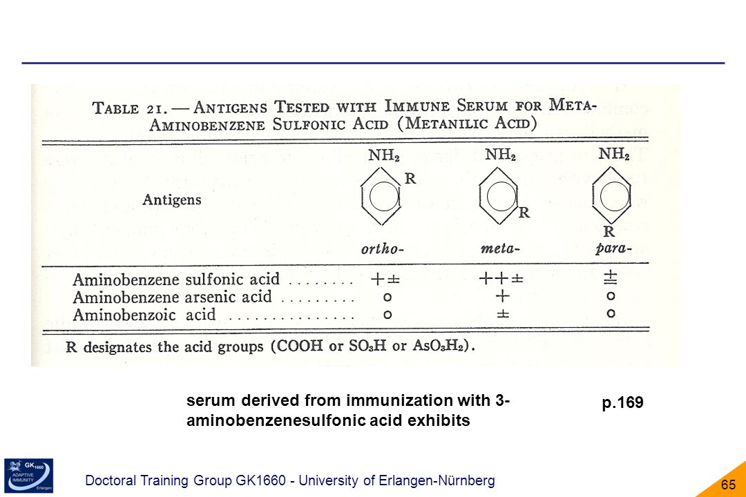 serum derived from immunization with 3-aminobenzenesulfonic acid exhibits