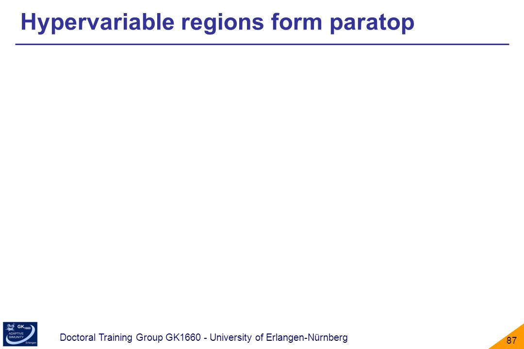 Hypervariable regions form paratop