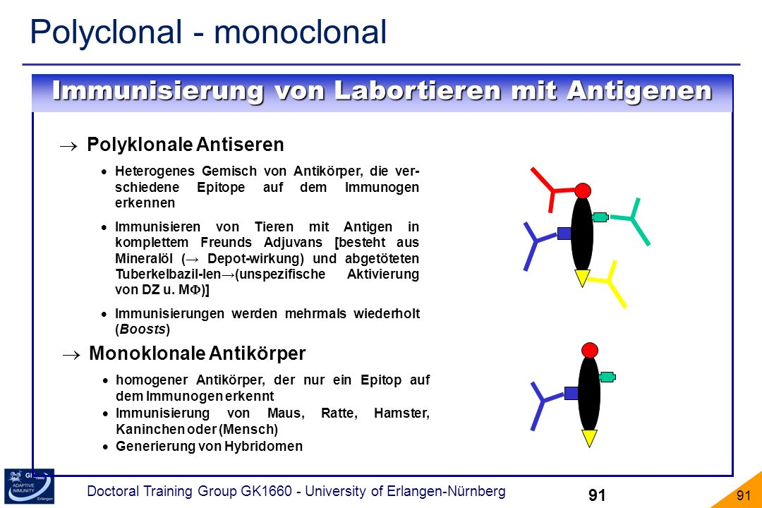 Immunisierung von Labortieren mit Antigenen