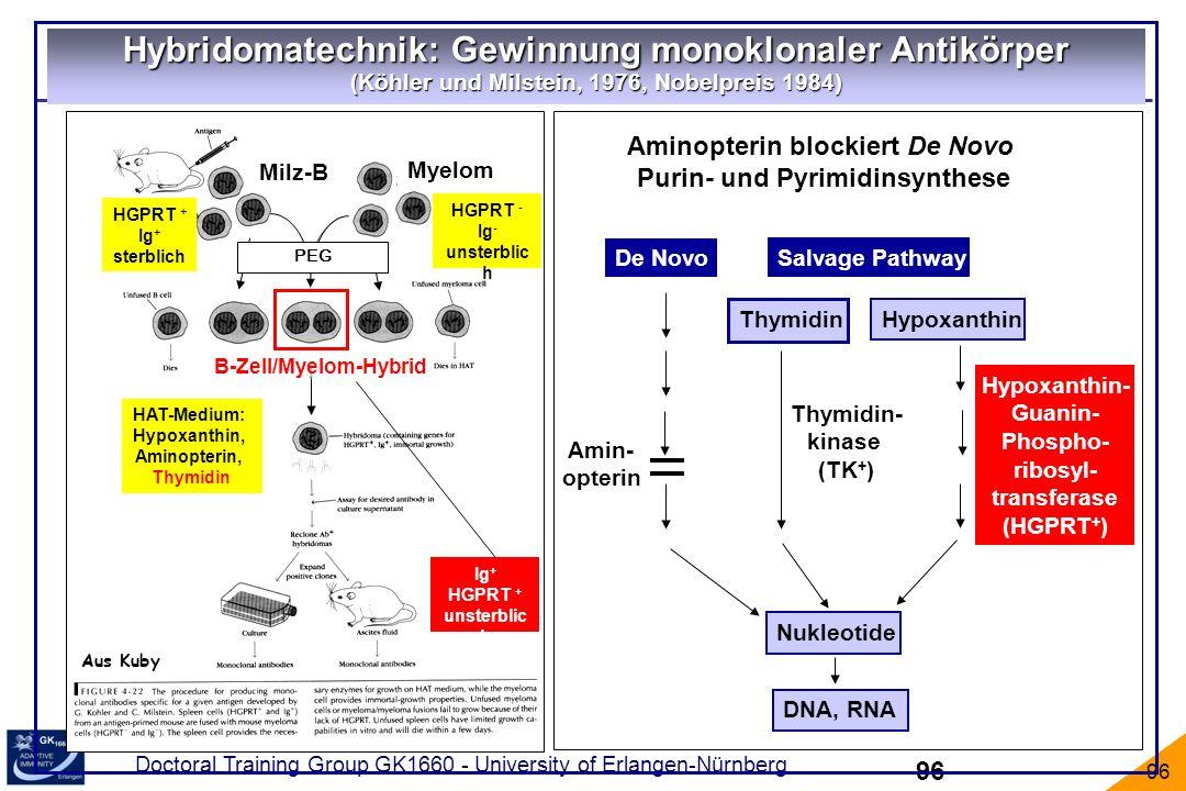 Hybridomatechnik: Gewinnung monoklonaler Antikörper