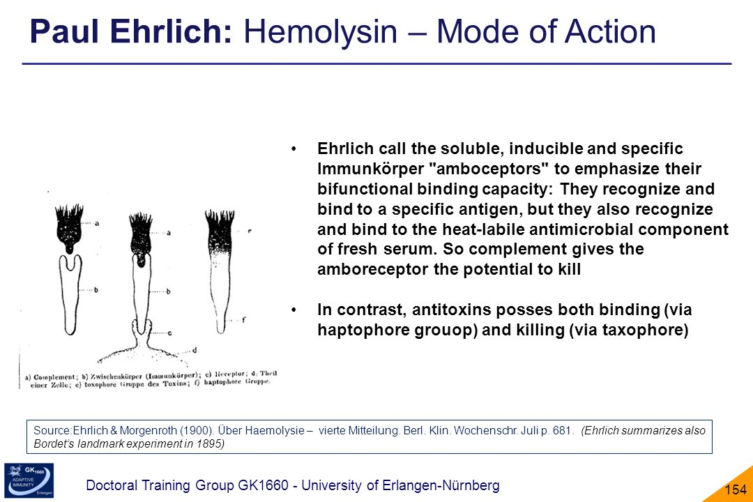 Paul Ehrlich: Hemolysin – Mode of Action