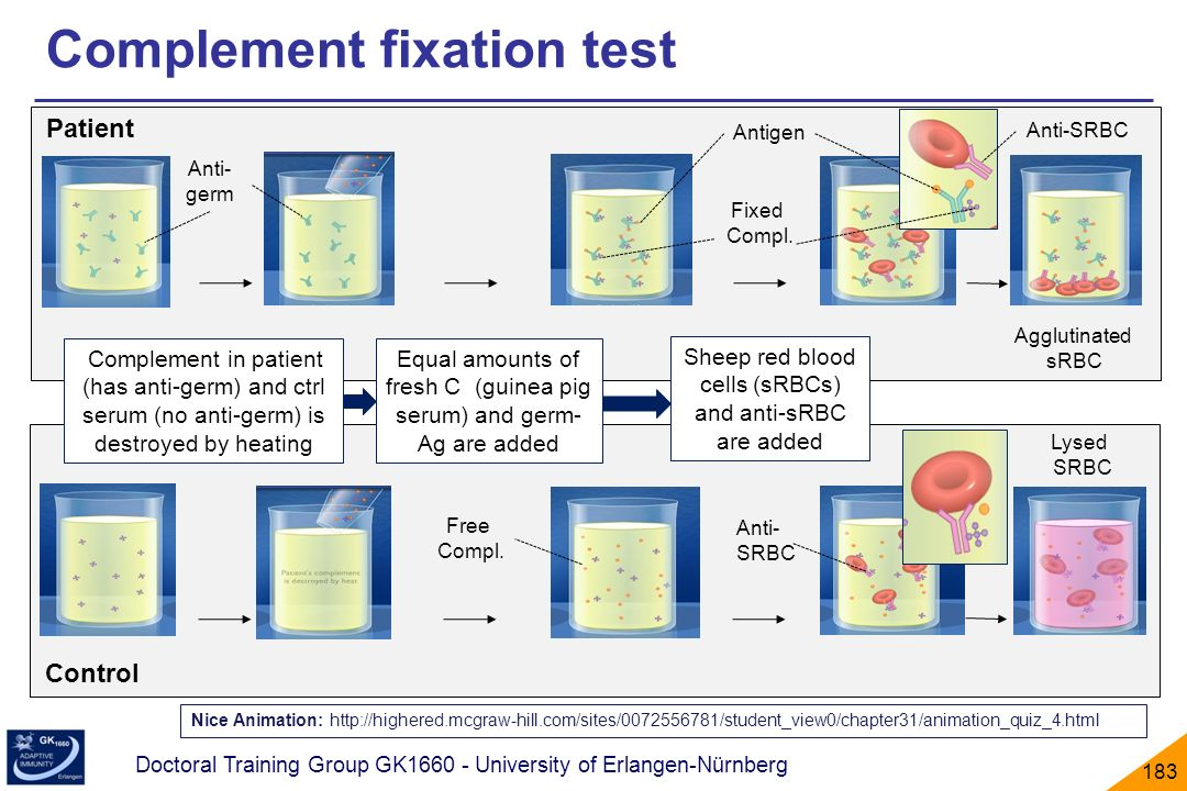 Complement fixation test