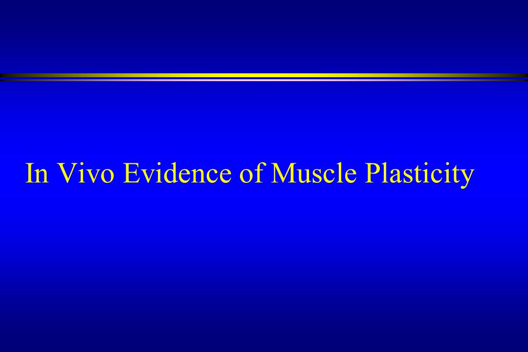 In Vivo Evidence of Muscle Plasticity