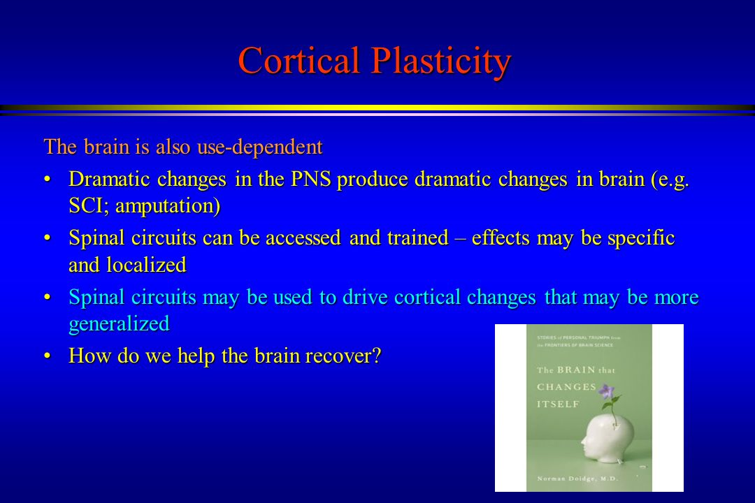 Cortical Plasticity The brain is also use-dependent