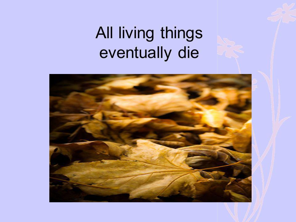 All living things eventually die