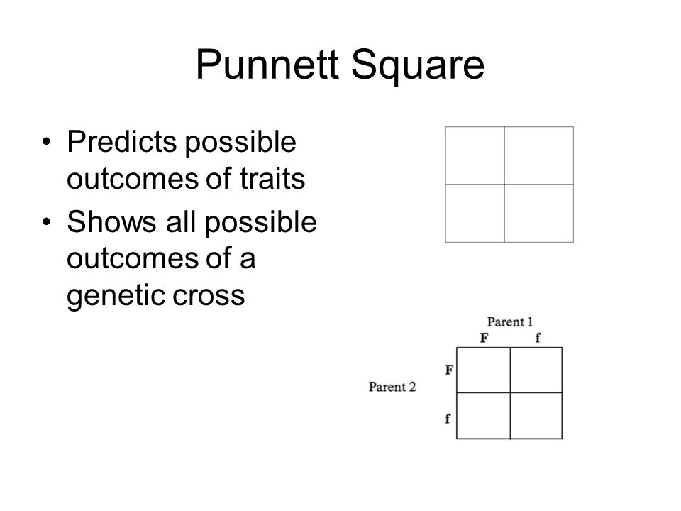 Punnett Square Predicts possible outcomes of traits