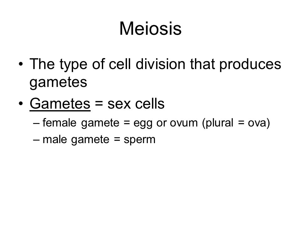 Meiosis The type of cell division that produces gametes