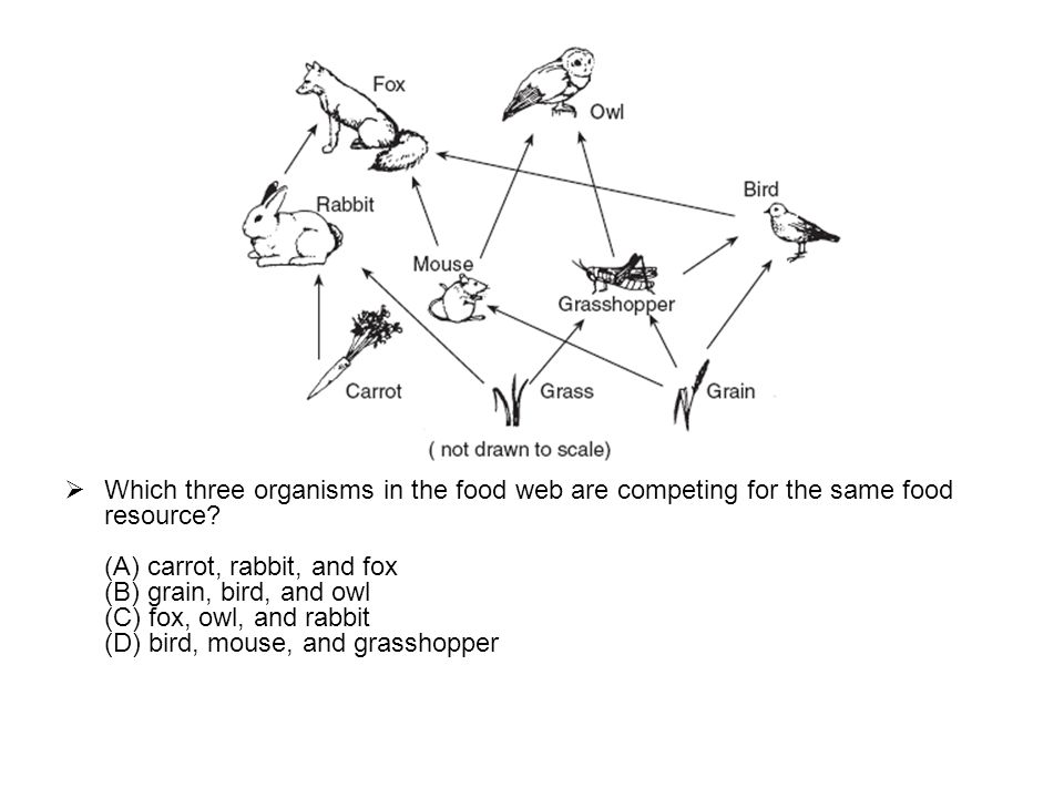 Which Organisms In This Food Web Are Omnivores