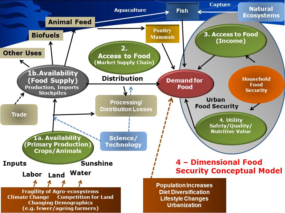 Food Security and Biotechnology - ppt video online download