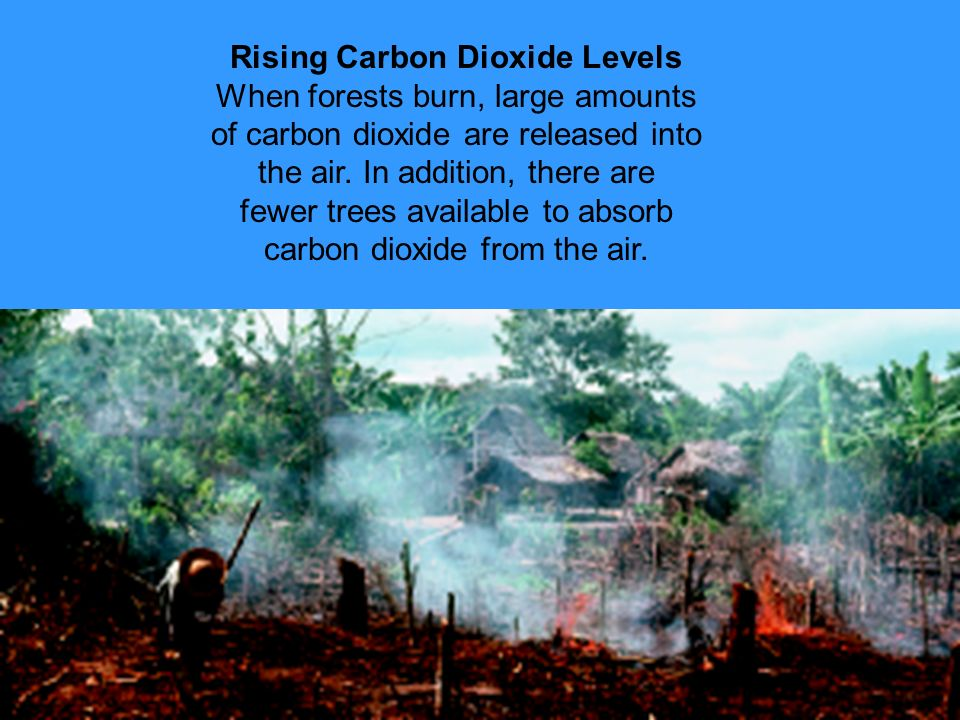 Rising Carbon Dioxide Levels When forests burn, large amounts of carbon dioxide are released into the air.