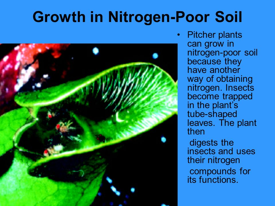 Growth in Nitrogen-Poor Soil