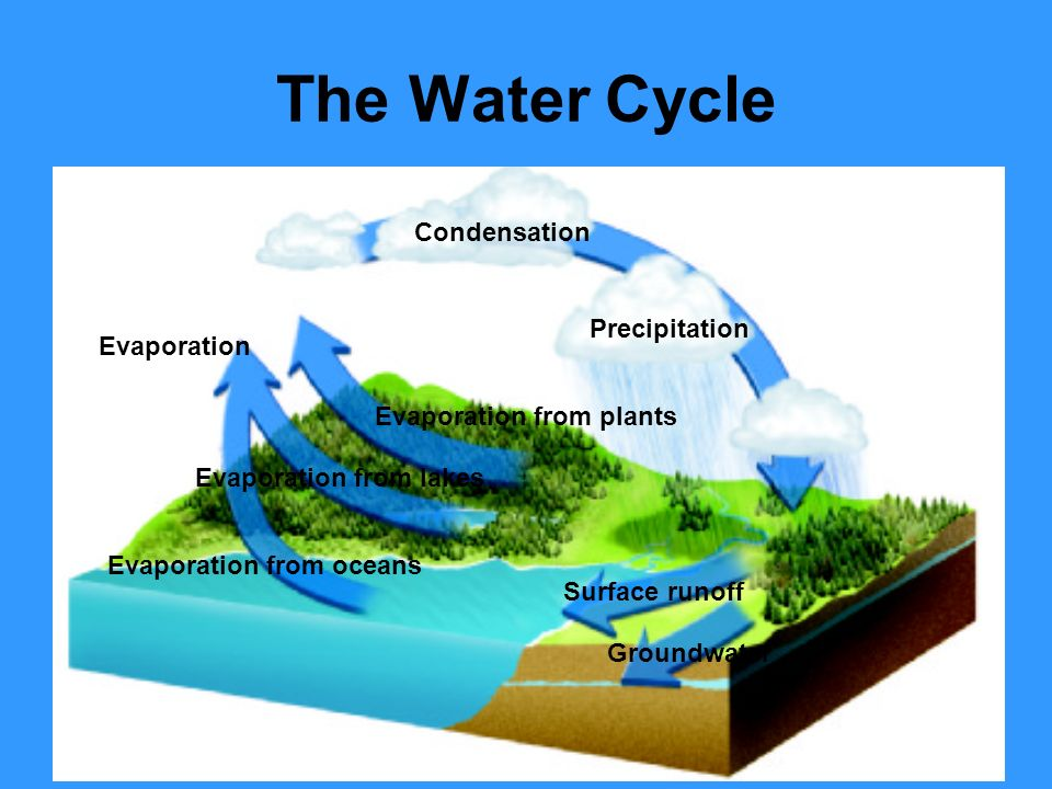 The Water Cycle Condensation Precipitation Evaporation