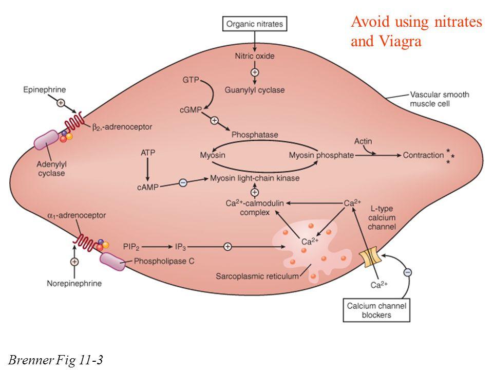 Nitrates viagra