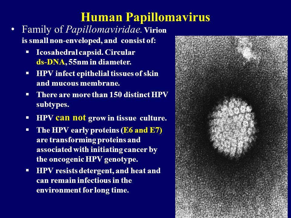 Family of Papillomaviridae