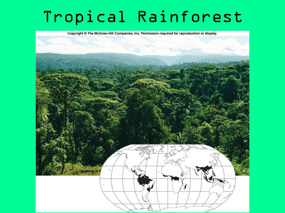 an introduction to the tropical rainforests of the world Rainforests are forests characterized by high rainfall, with annual rainfall in the case of tropical rainforests between 250 and 450 centimetres (98 and 177 in), and definitions varying by region for temperate rainforests.