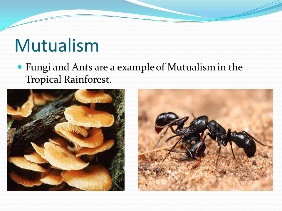 mutualistic symbiotic relationship examples in the tropical rainforest