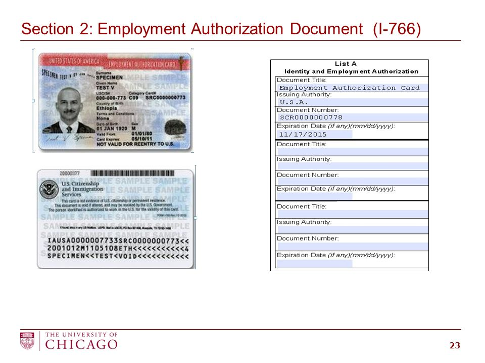 employment authorization document form i 766 - Moren.impulsar.co