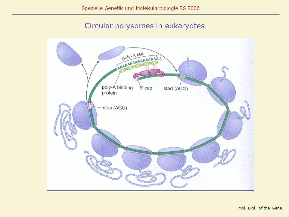Circular polysomes in eukaryotes