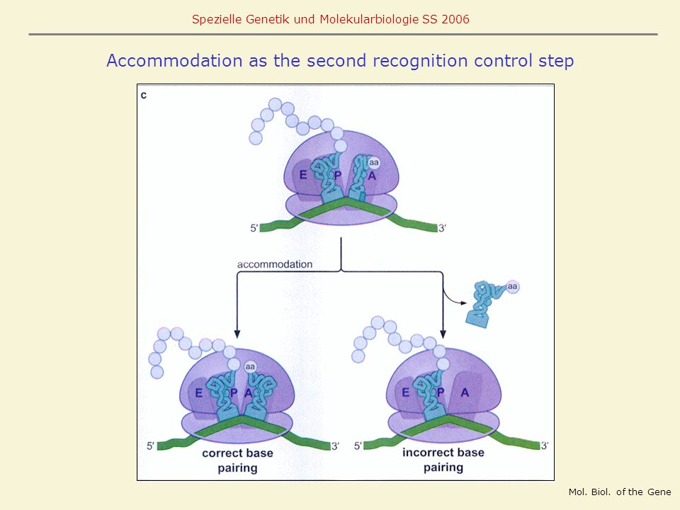 Accommodation as the second recognition control step