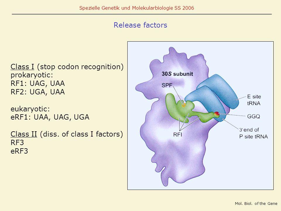 Class I (stop codon recognition) prokaryotic: RF1: UAG, UAA