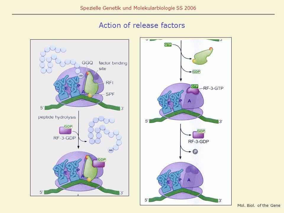 Action of release factors