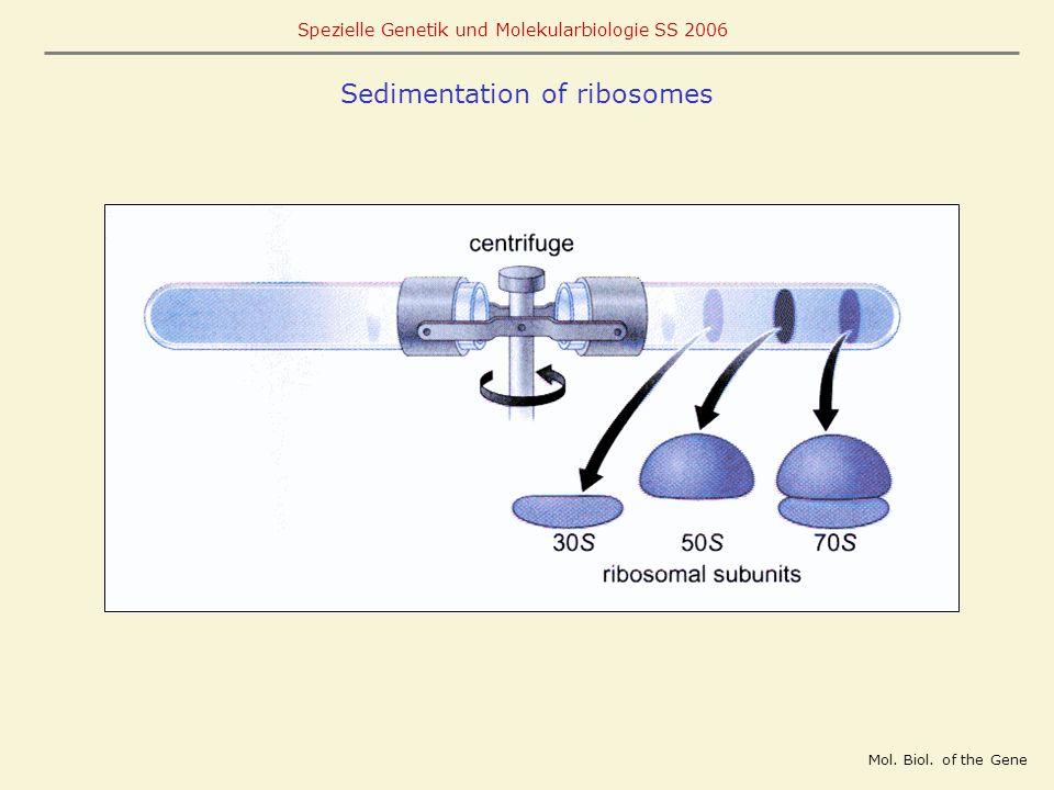 Sedimentation of ribosomes