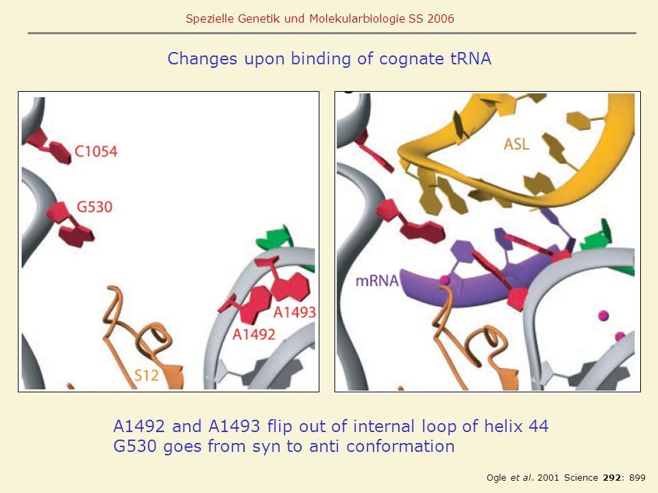 Changes upon binding of cognate tRNA