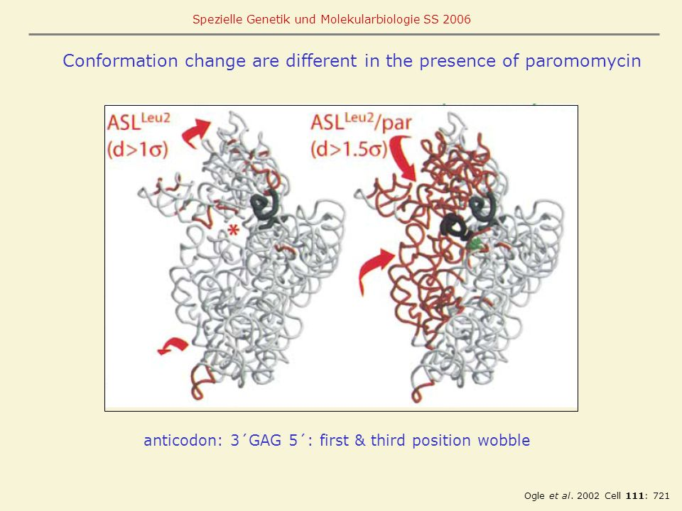 Conformation change are different in the presence of paromomycin