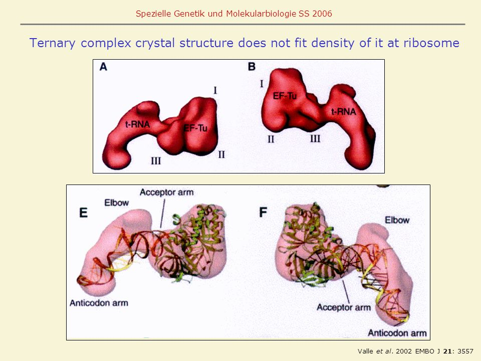 Ternary complex crystal structure does not fit density of it at ribosome