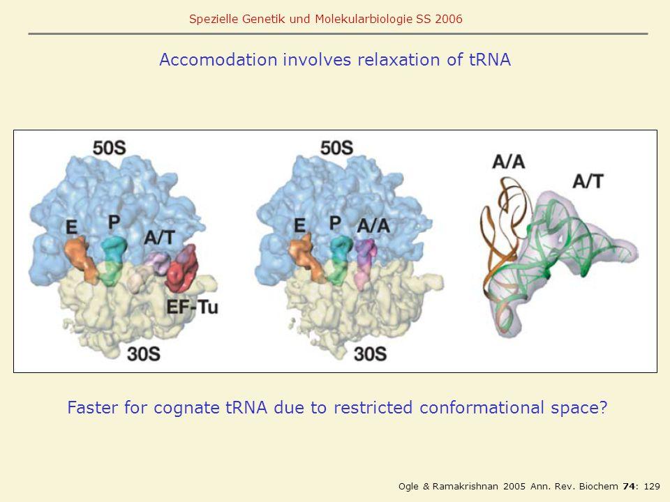 Accomodation involves relaxation of tRNA