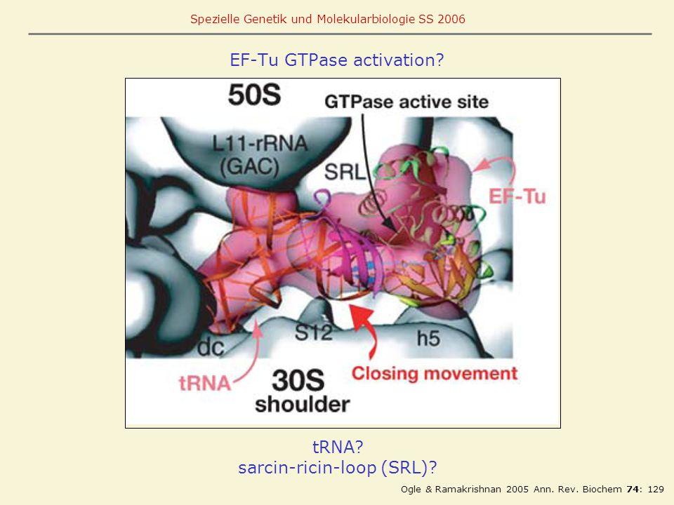 EF-Tu GTPase activation