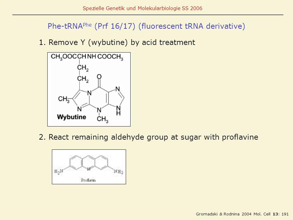 Phe-tRNAPhe (Prf 16/17) (fluorescent tRNA derivative)