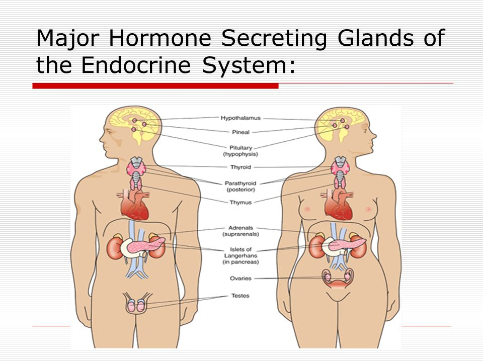 Charmant Anatomy And Physiology 2 Endocrine System Test ...