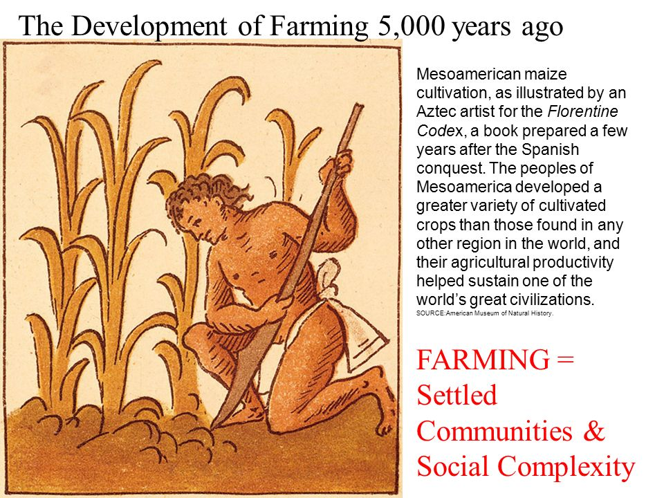 the development of farming social complexity Foraging, farming, and social complexity in the pre-pottery neolithic of the southern cial development in general, previous research on this topic can be divided.