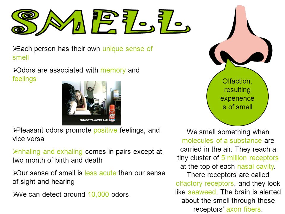 3 Olfaction; resulting experiences of smell