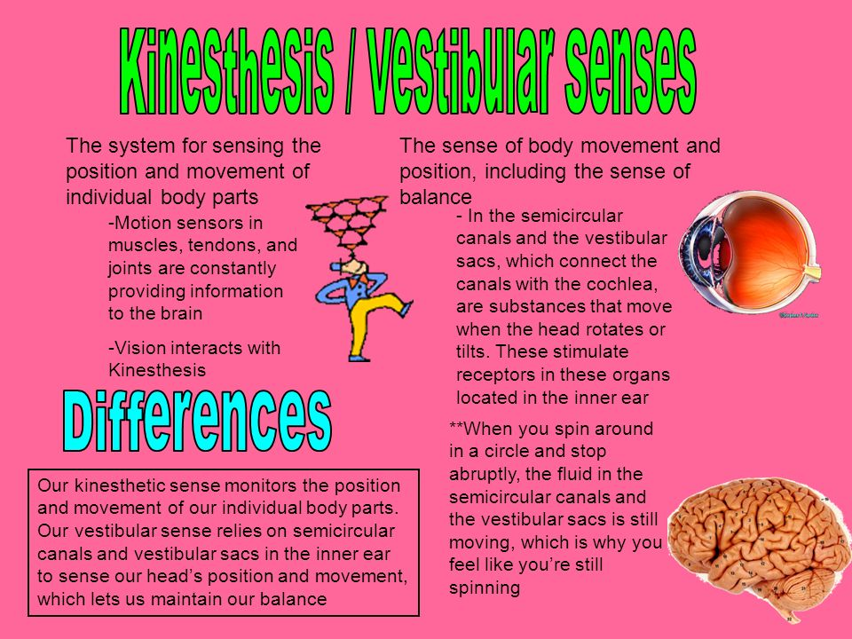 kinesthesis sense of active movement This is a review of the proprioceptive senses generated as a result of our own actions they include the senses of position and movement of our limbs and trunk , the sense of effort, the sense of force, and the sense of heaviness receptors involved in proprioception are located in skin, muscles, and joints.