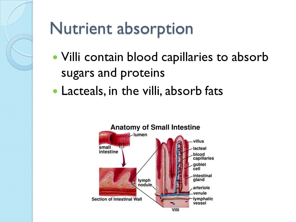 Nutrient absorption Villi contain blood capillaries to absorb sugars and proteins.