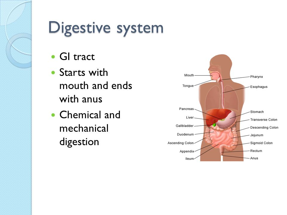 Digestive system GI tract Starts with mouth and ends with anus