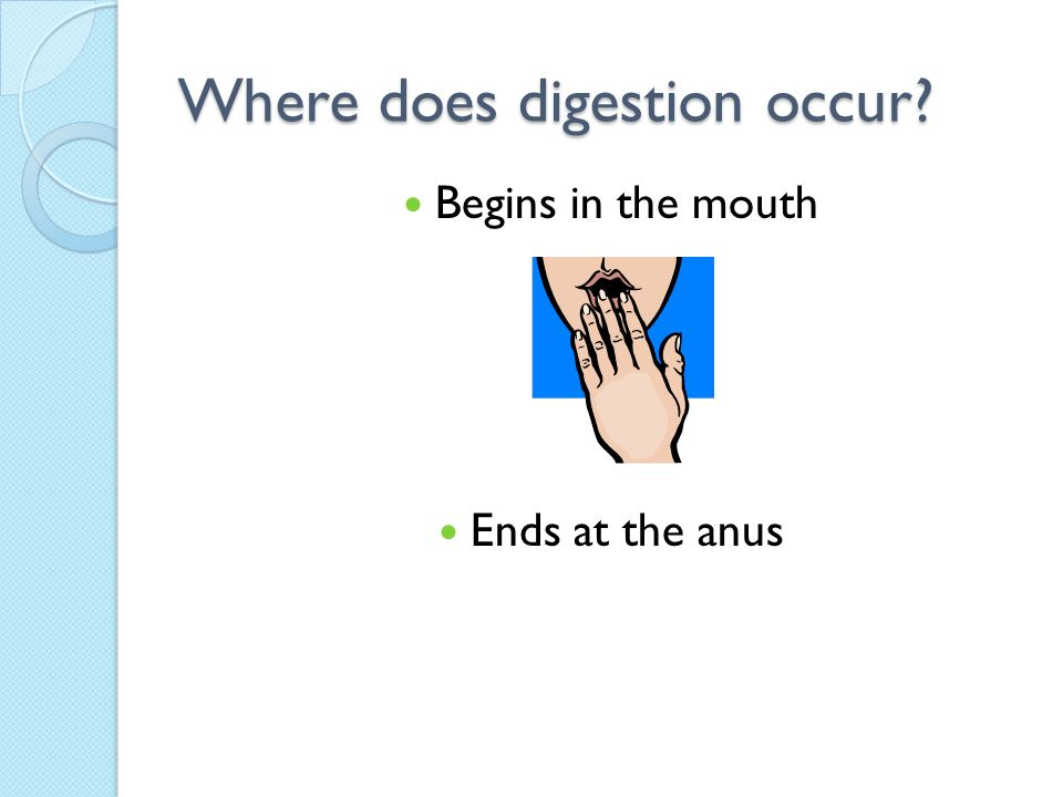 Where does digestion occur