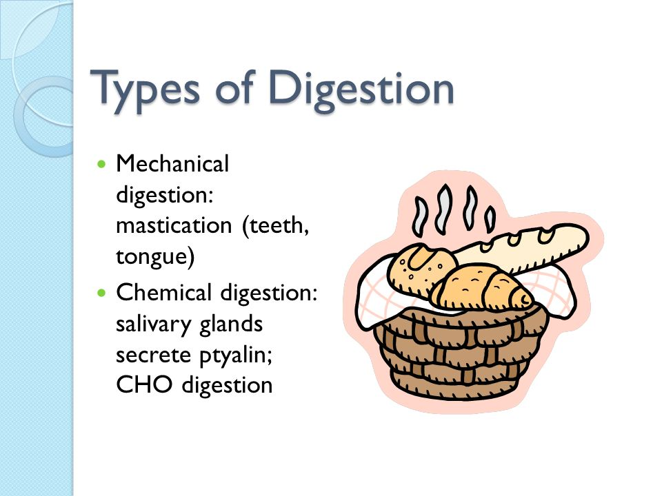Types of Digestion Mechanical digestion: mastication (teeth, tongue)