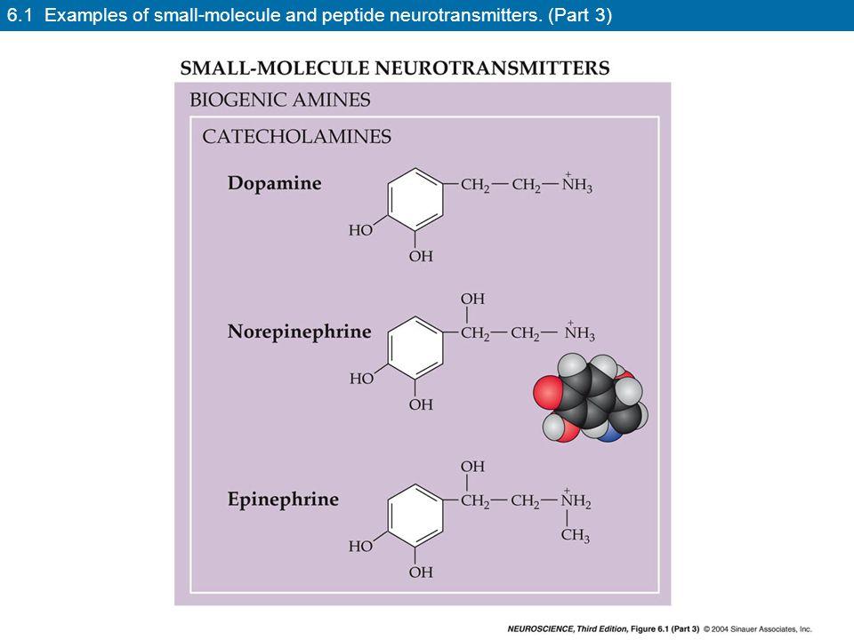 neuroscience neurotransmitters small molecule and neuroactive