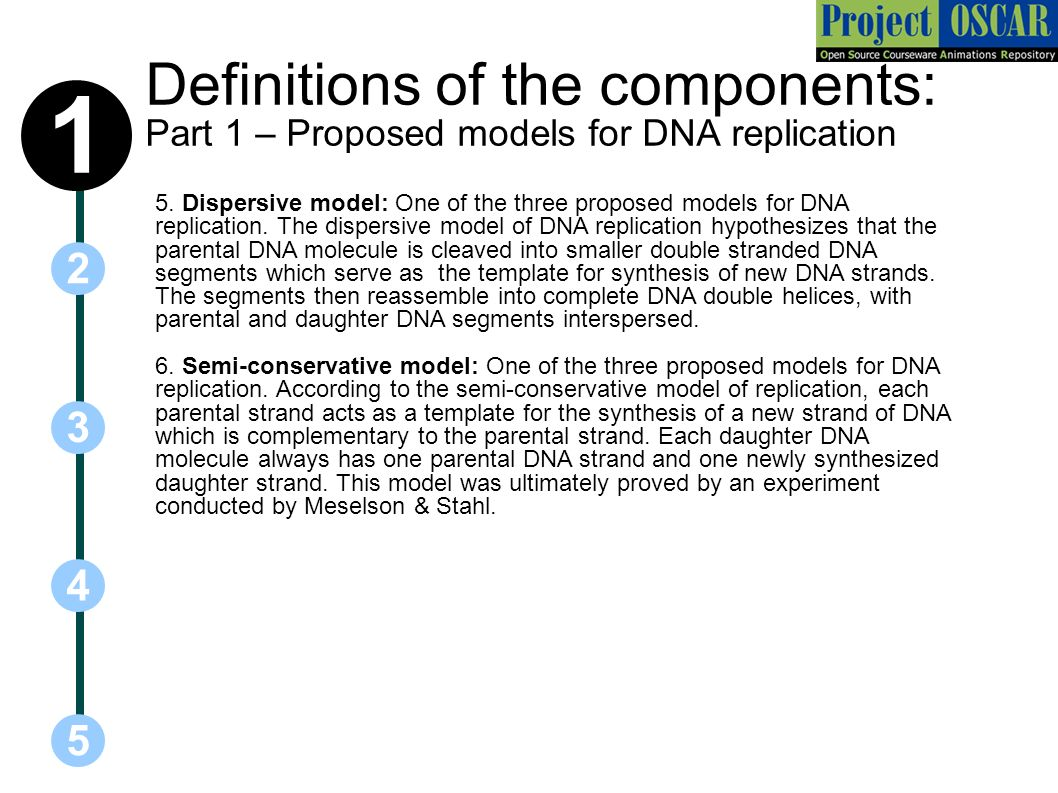 What acts as the template in dna replication gallery templates deepa john harini chandra affiliations ppt download definitions of the components part 1 proposed models for pronofoot35fo Images