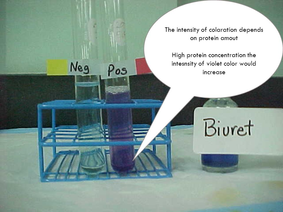 quantification of proteins in solution by By using the bradford protein assay only the molecules that bind to the proteins in solution exhibit this change in absorption.