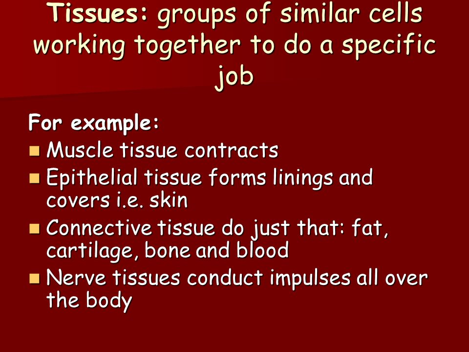 Tissues: groups of similar cells working together to do a specific job