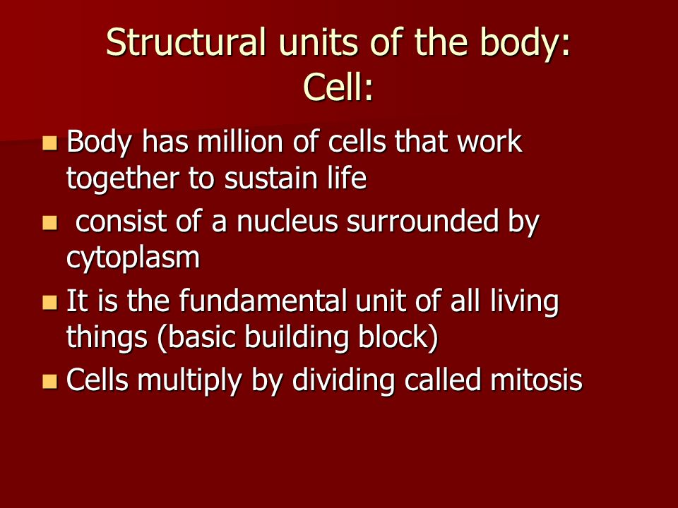 Structural units of the body: Cell: